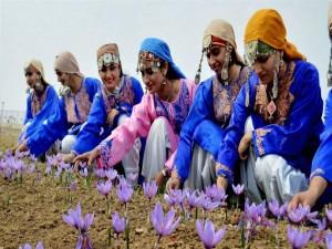 Saffron Festival in Kashmir