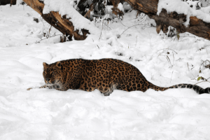 Dachigam Wild Life sanctuary