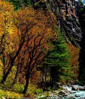 Kashmir Paradise